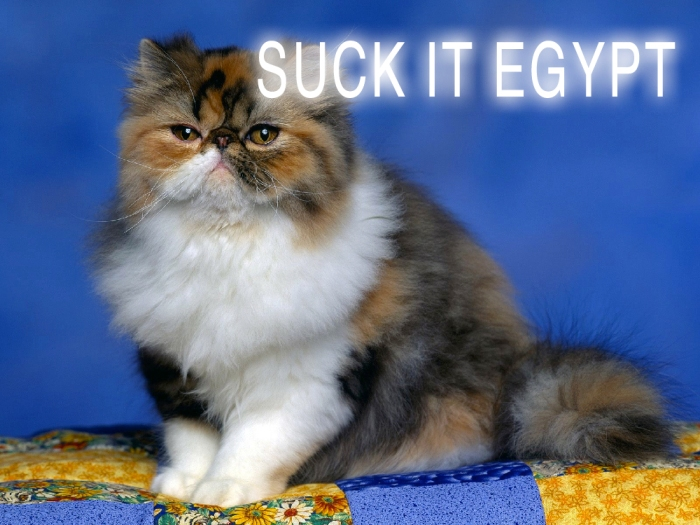 Cute-Persian-Cat-HD-Wallpaper