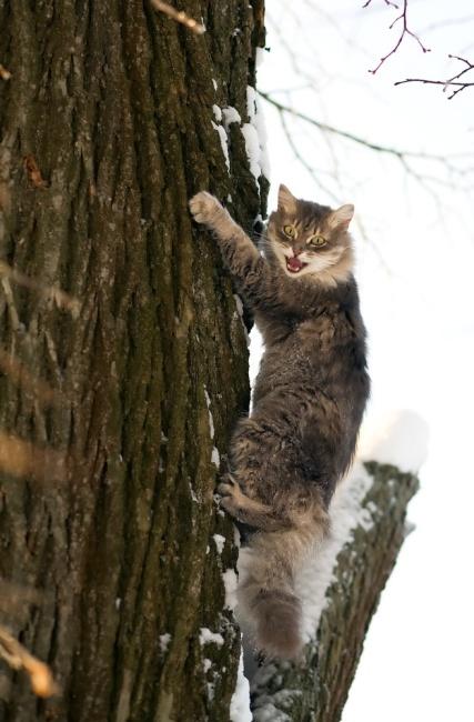 cat up tree shutterstock_45595708
