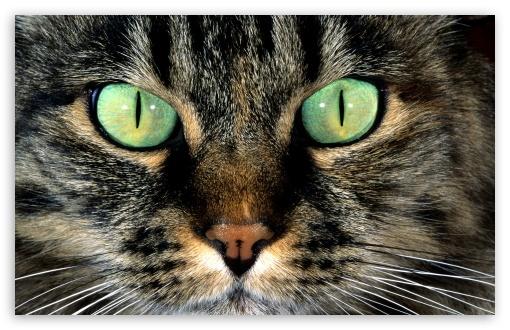 cat_face-t2